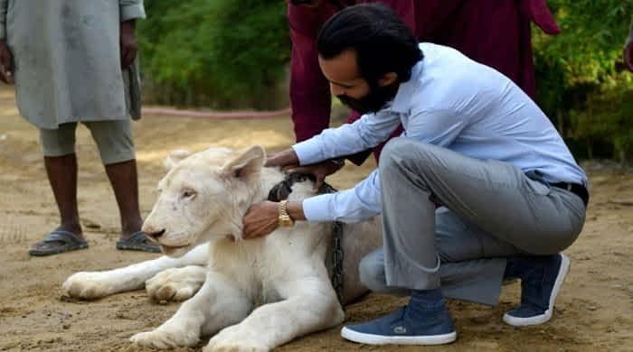 Pakistani elite's love of exotic wildlife